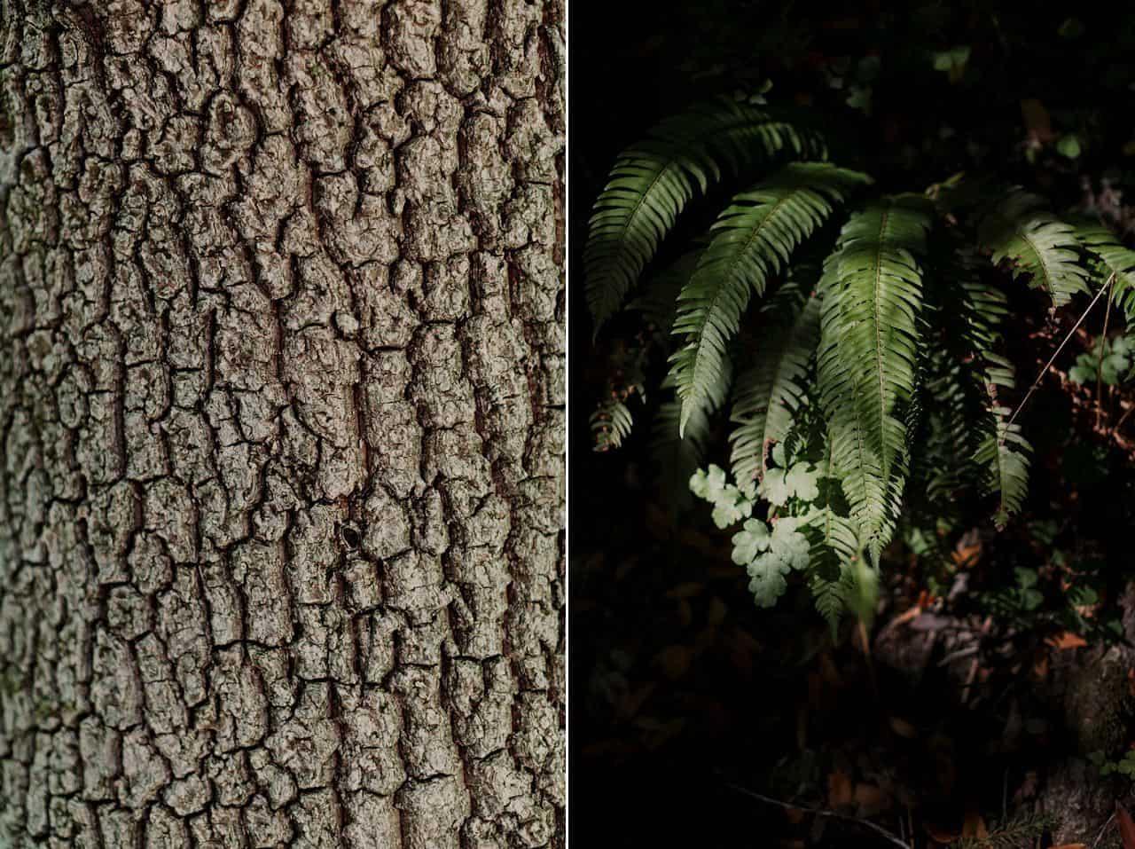 california-redwoods-wedding-mendocino_0039