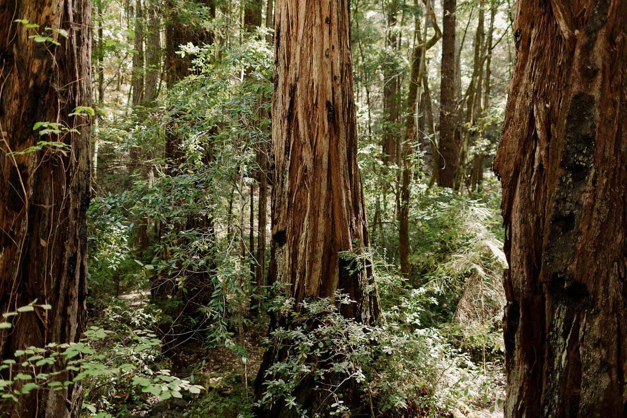 california-redwoods-wedding-mendocino_0050