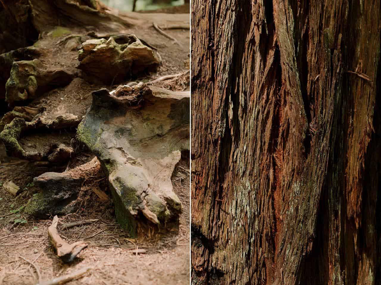 california-redwoods-wedding-mendocino_0067