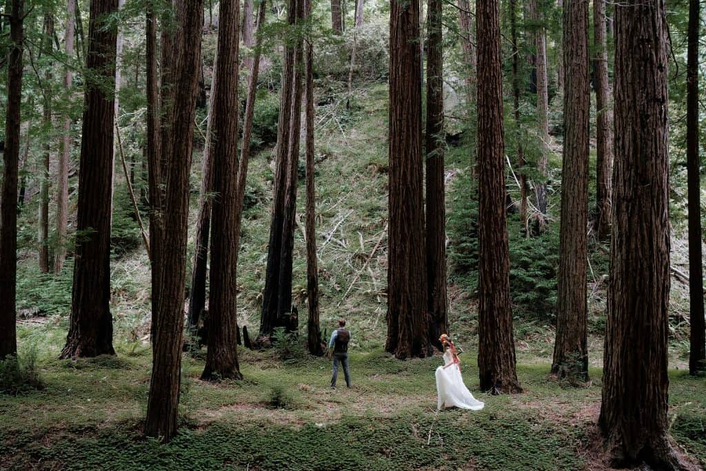 Santa Cruz Redwoods Wedding