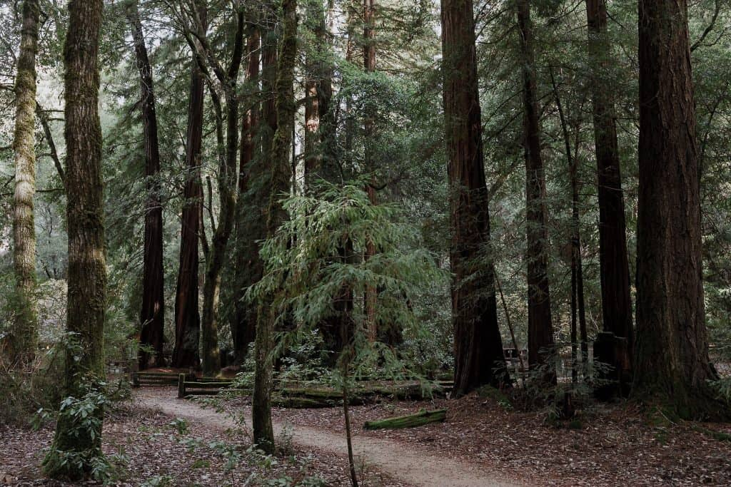 Big Basin Redwoods Wedding Photographer-2